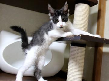 Waco_kitten3_18083003