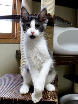 Waco_kitten3_18083006