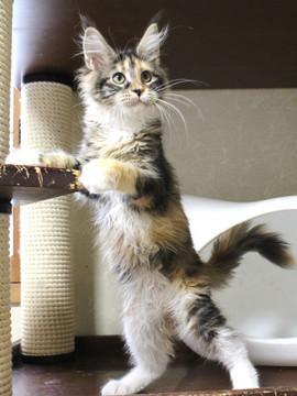 Waco_kitten4_18083001