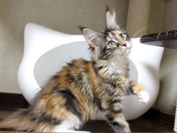 Waco_kitten4_18083003