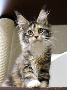 Waco_kitten4_18083004