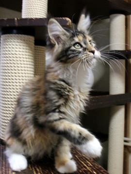 Waco_kitten4_18083005