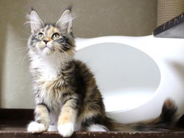 Waco_kitten4_18083006