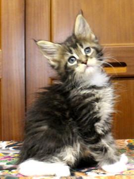 Cartier_kitten3_18091201