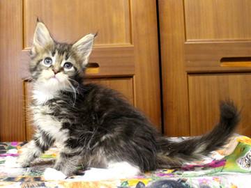 Cartier_kitten3_18091203