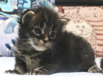 Ange_kitten2_18091502