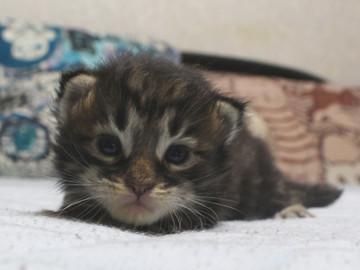 Ange_kitten3_18091501