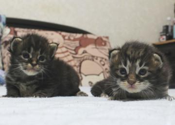 Ange_kittens_18091502