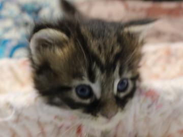 Ange_kitten1_18092102