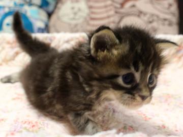 Ange_kitten3_18092102