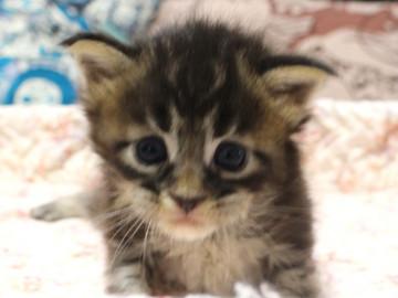 Ange_kitten3_18092103