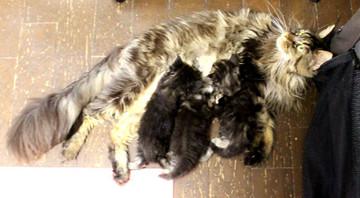 Ange_kittens_18092102