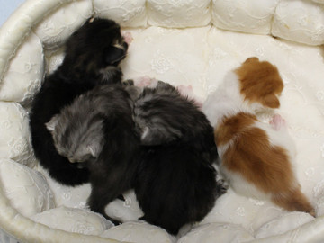 Runrun_kittens_18092701