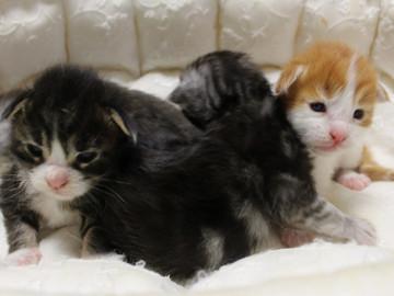 Runrun_kittens_18092702