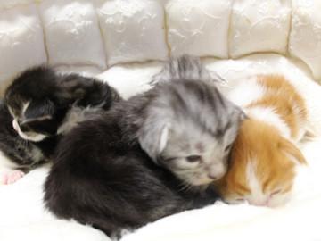 Runrun_kittens_18092703