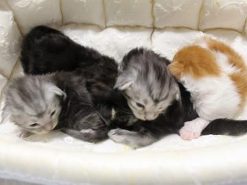 Runrun_kittens_18092704