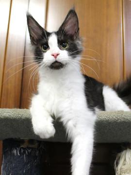Waco_kitten3_180100103