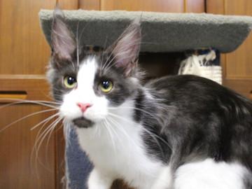 Waco_kitten3_180100105