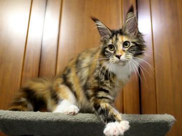 Waco_kitten4_180100101