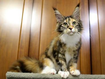 Waco_kitten4_180100102