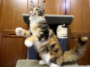 Waco_kitten4_180100104
