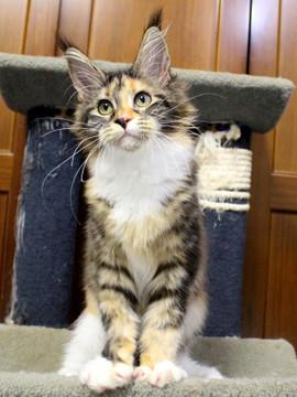 Waco_kitten4_180100106