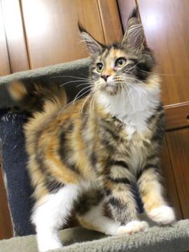 Waco_kitten4_180100110