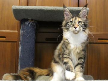 Waco_kitten4_180100112