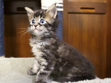 Ange_kitten3_18100402