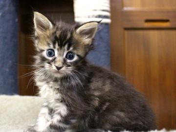 Ange_kitten3_18100403