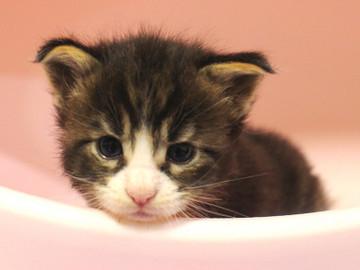 Runrun_kitten1_18100601