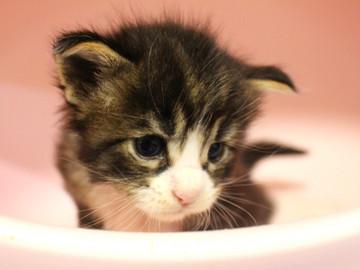 Runrun_kitten1_18100602