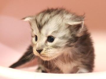 Runrun_kitten2_18100602