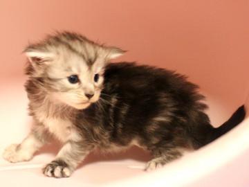 Runrun_kitten2_18100604