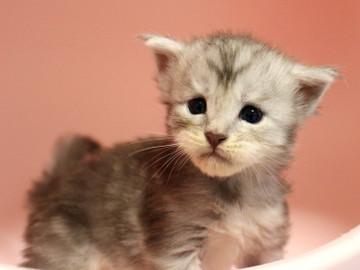 Runrun_kitten3_18100604