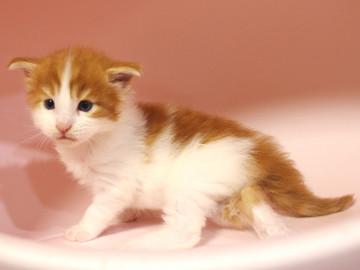 Runrun_kitten4_18100603