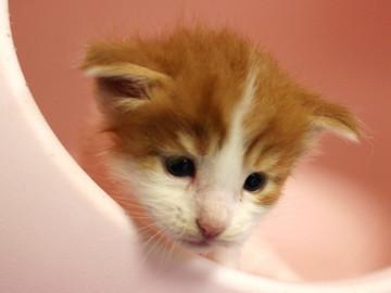Runrun_kitten4_18100604