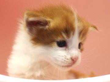 Runrun_kitten4_18100605