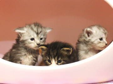 Runrun_kittens_18100601