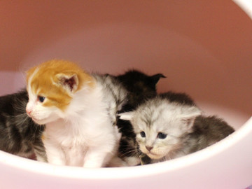 Runrun_kittens_18100602