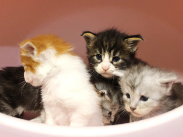 Runrun_kittens_18100603