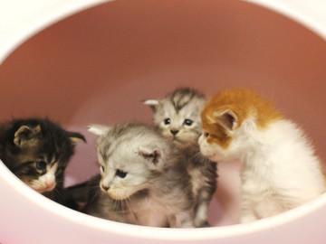Runrun_kittens_18100604
