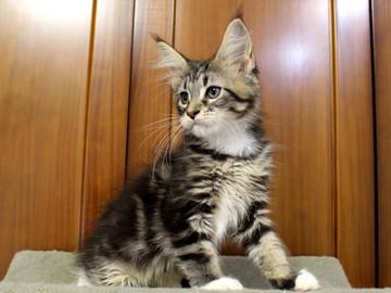 Cartier_kitten3_18100804