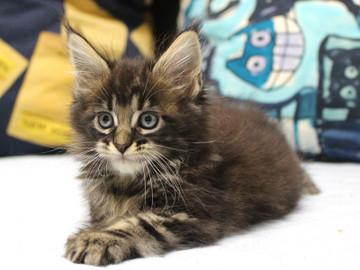 Ange_kitten2_18101708