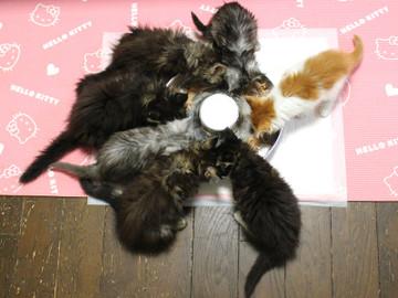 Kittens_18102901