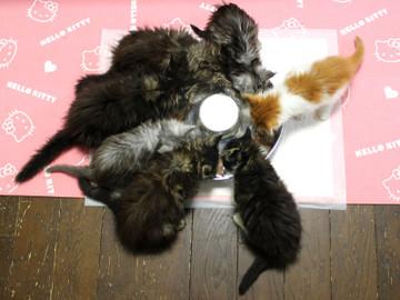 Kittens_18102902