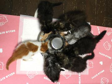 Kittens_18102903