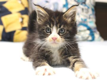Runrun_kitten1_18103002