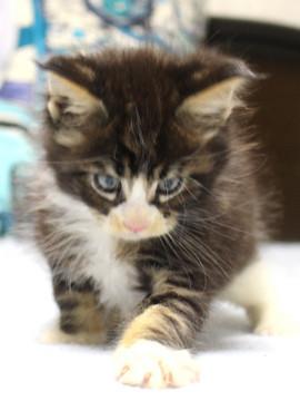Runrun_kitten1_18103006