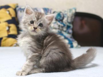 Runrun_kitten3_18110104